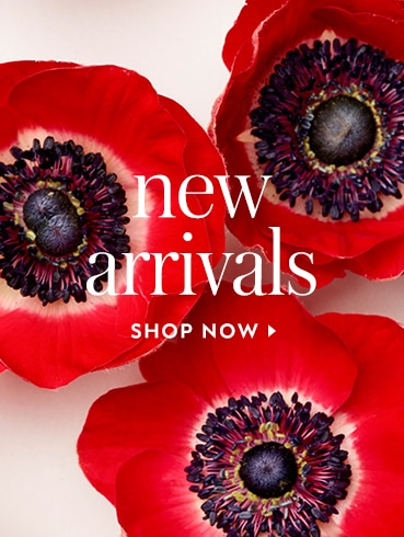 new arrivals. shop now.